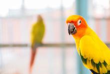 Lovely Orange Parrot