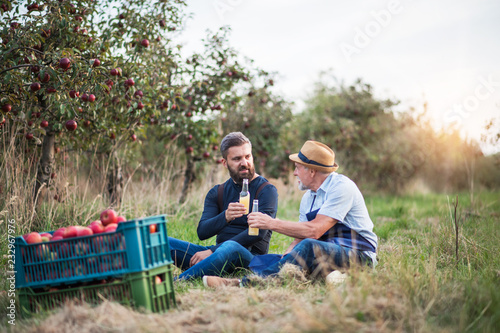 Foto A senior man with adult son holding bottles with cider in apple orchard in autumn