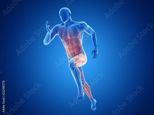 Obraz 3d rendered illustration of a joggers muscles - fototapety do salonu
