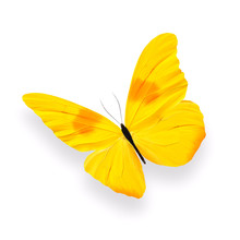 Yellow Butterfly With Shadow Isolated On White Background