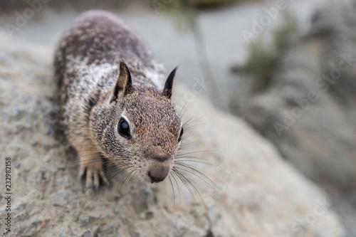 Frimousse de l'écureuil