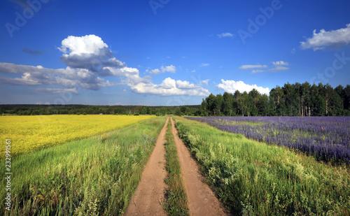 Poster Landschap summer landscape