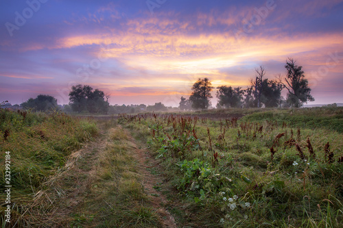 dirt road in the woods at dawn