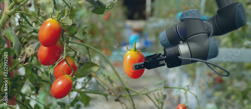 Fototapeta smart robotic in agriculture futuristic concept, robot farmers (automation) must be programmed to work in the vertical or indoor farm for increase efficiency, growing a seed, harvesting, reduce time obraz