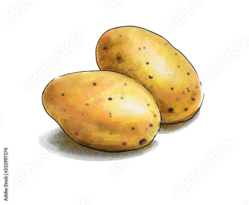 Fotografering Colorful and juicy potato illustration