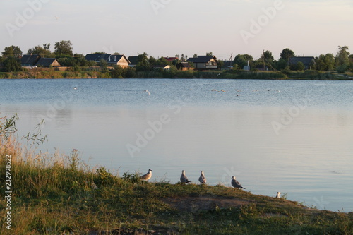 Poster Donkergrijs lake, water, river, landscape, sky, nature, blue, reflection, summer, trees, view, pond, forest, village, green, grass, morning, tree, cloud, autumn, clouds, panorama, scene, outdoors