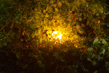 Luminous Ball Lamp In Dense Thickets Of Green Shrubs In The Dark
