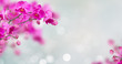 Purple orchid flowers with butterflies on defocused gray background banner with copy space