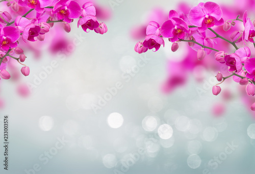Fototapeta Purple orchid flowers with butterflies on defocused gray background with copy sp