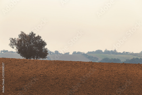 Fotobehang Wit Foggy morning, autumn landscape with fields and trees