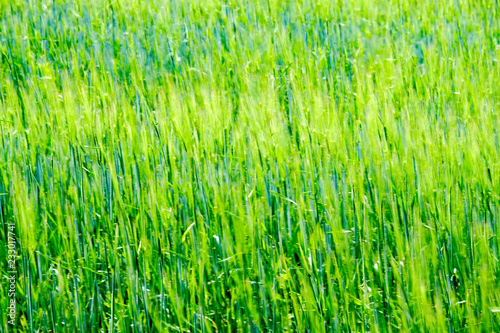 Staande foto Lime groen summer green meadow with abstract pattern from grass and flowers