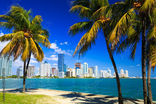 In de dag Palm boom Skyline view of Miami Florida