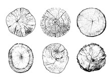 Set Of Cut Tree Trunks With Circular Rings Isolated On White Background. Textures Of Wood Logs. Black And White Vector Illustration