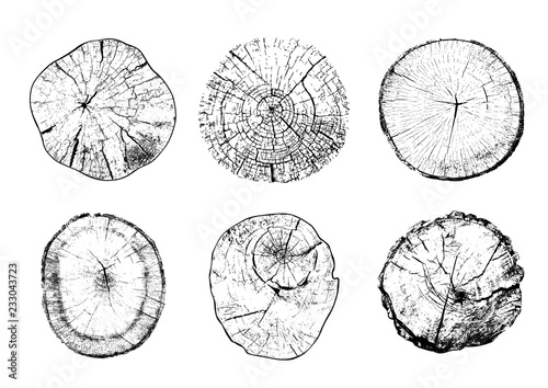 Fotografia Set of cut tree trunks with circular rings isolated on white background