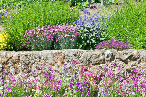 Photo  Pink, blue flowers in bloom by a stone wall in rockery garden, on a sunny summer day
