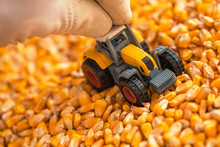 Farmer Playing With Tractor Toy Over Harvested Corn Seed