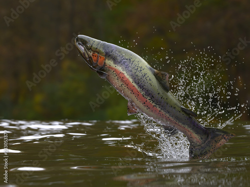Valokuva Trout fish jumping out of lake or river with splashes 3d render