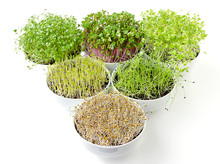 Triangle Of Microgreens And Sp...