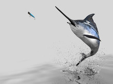 Big Catch Of  Blue Marlin Sword Fish  In White Background With Splashes Hooked By Popper Bait 3d Render