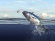 Tuna fish jumping out of water half of it in water, so many splashes and action in ocean 3d render