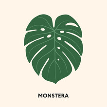 Monstera Tropical Jungle Plant Green Big Palm Leaf. Flat Vector Illustration Isolated On White.