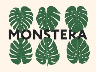 Monstera Tropical Jungle Plant Green Leaves. Ilustracja wektorowa płaski zestaw na białym tle.