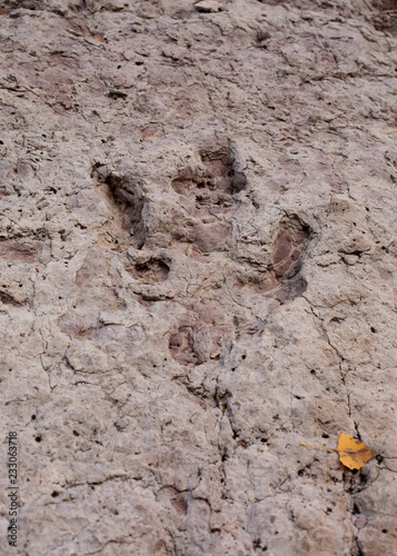 45ce51a8aa4 A dinosaur track is deeply imprinted in some sandstone. An aspen leaf is in  the