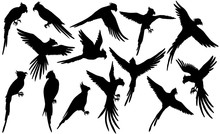 Vector Parrot Silhouettes On White