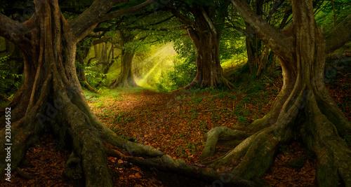 Foto op Canvas Bomen Tropical forest landscape
