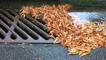Storm Drain Clogged With Leaves During Rain