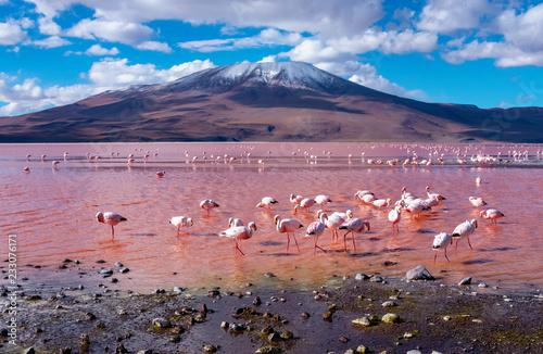 Foto op Aluminium Flamingo Flamingos in Laguna Colorada , Bolivia