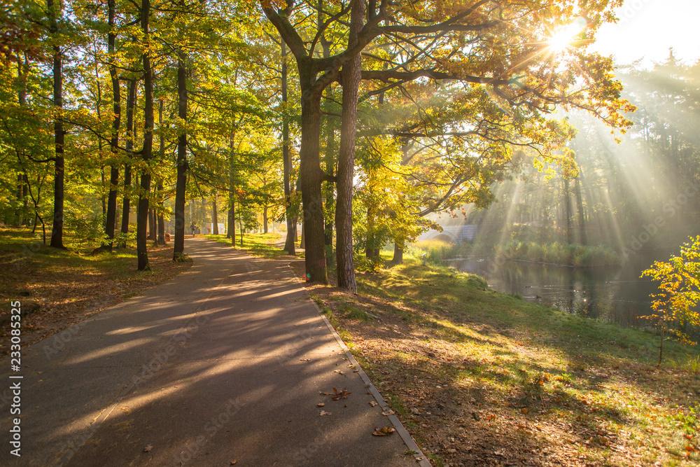 Fototapeta Jesień w łódzkim Arturówku, Las Łagiewnicki