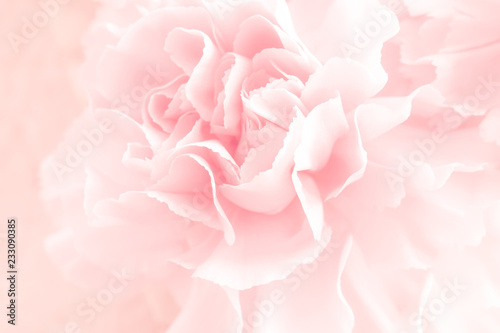 Fotografie, Obraz  Pink Carnation Flowers Bouquet. soft filter.