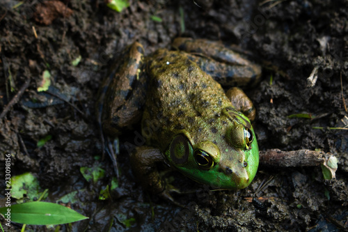 Tuinposter Kikker Frog by The Lake