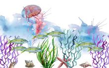 Sea Jellyfish. Isolated On White Background.