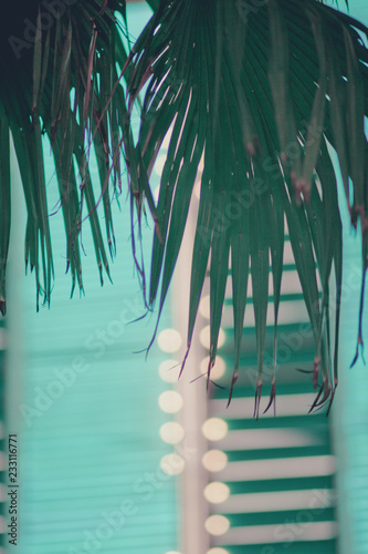 Photo  Palm Leaves and Neon