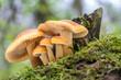 canvas print picture - Shot of group edible mushrooms known as Enokitake