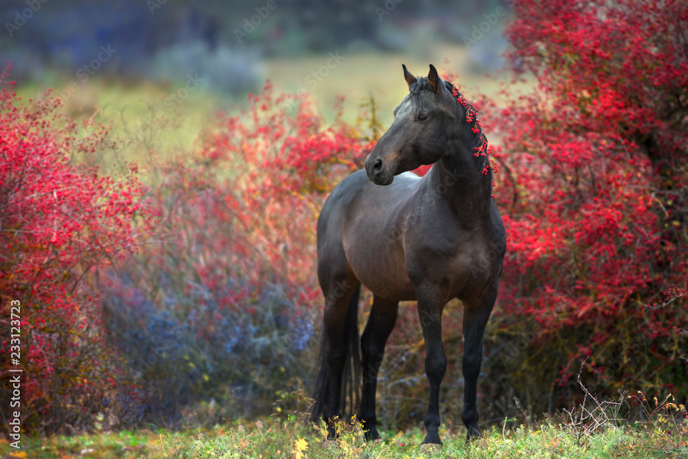 Bay stallion standing in crataegus trees