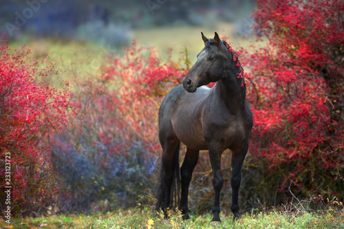 Poster Chevaux Bay stallion standing in crataegus trees
