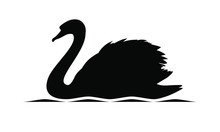 Swan Graphic Icon. Swan Black Silhouette On The Water Isolated On White Background. Logo. Vector Illustration