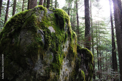 Photographie  A Cozy Mossy Rock in the Middle of the Forest