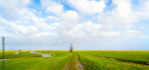 Fotografija Flat and vibrant green summer polder landscape in The Netherlands