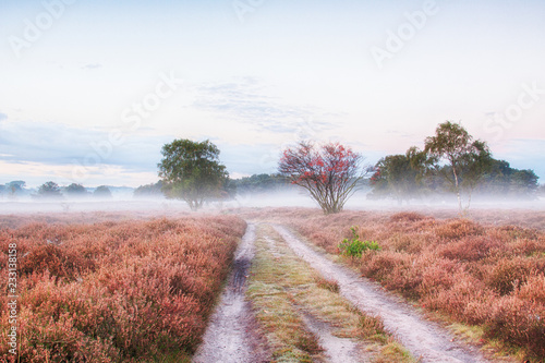 Foto op Aluminium Wit Beautiful sunrise with low hanging fog in a Dutch landscape with flowering heather. Shot against a clear sky.