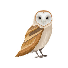 Barn Owl With White Face And B...