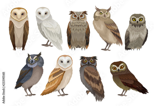 Photo Stands Owls cartoon Flat vector set of different species of owls. Wild forest birds. Flying creatures. Elements for ornithology book