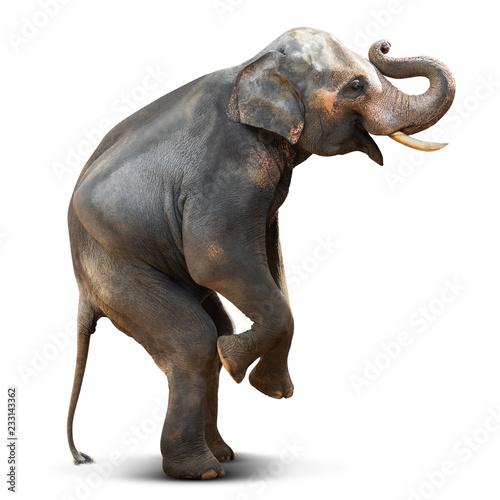 Photo  Asian elephant isolated