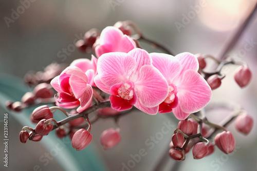 Obraz Storczyki kwitnące - fototapety do salonu