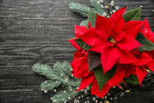 Christmas Flower Poinsettia On Wooden Table