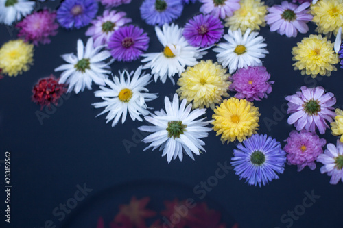 Foto op Canvas Bloemen Chrysanthemum with leaves, petals