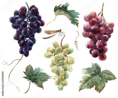 Fotografia Watercolor grape set